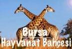 Hayvanat Bahçesi, Bursa hayvanat bahçesi, Bursa hayvanat bahçesi hakkında bilgi, Bursa hayvanat bahçesi nerede, Bursa hayvanat bahçesi nasıl gidilir, Bursa hayvanat bahçesi giriş ücreti, Bursa hayvanat bahçesi ziyaret saatleri, Bursa hayvanat bahçesi hayvanları