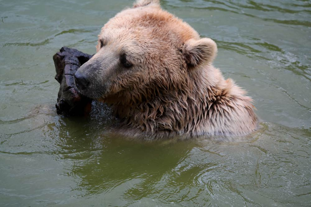 Bursa Hayvanat Bahçesi, Bursa Hayvanat Bahçesi hayvanlar, Bursa Hayvanat Bahçesi hakkında bilgi, Bursa Hayvanat Bahçesi giriş ücreti, Bursa Hayvanat Bahçesi ziyaret saatleri, Bursa Hayvanat Bahçesi nerede