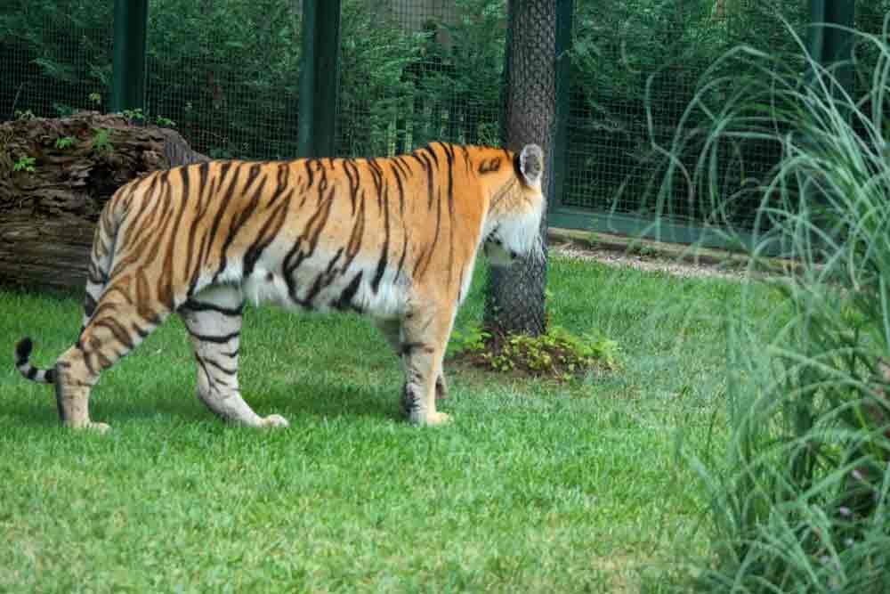 Bursa Hayvanat Bahçesi, Bursa Hayvanat Bahçesi giriş ücreti, Bursa Hayvanat Bahçesi ücreti, Bursa Hayvanat Bahçesi fiyatı, Bursa Hayvanat Bahçesi giriş fiyatı